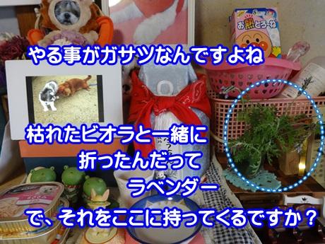 0711-01_20150711193300c23.jpg