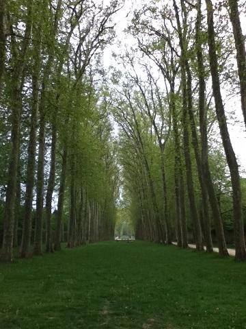 パリ ベルサイユ宮殿庭園4