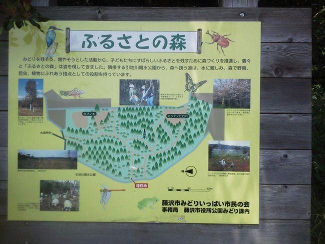 故郷の森.JPG