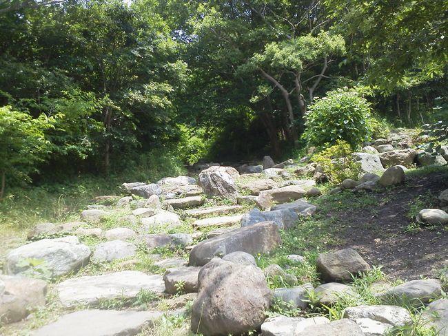 故郷の森ー1.JPG