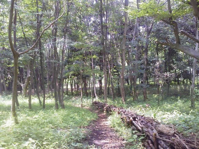 故郷の森ー2.JPG