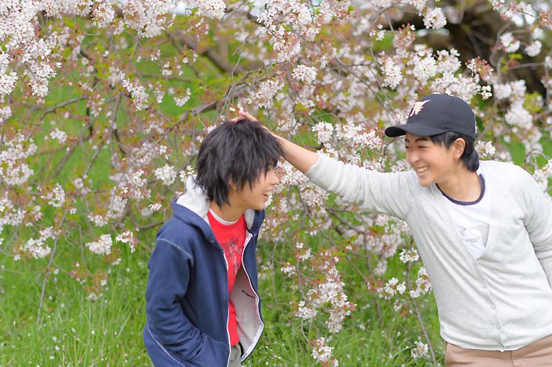 002BH6_sakura.jpg