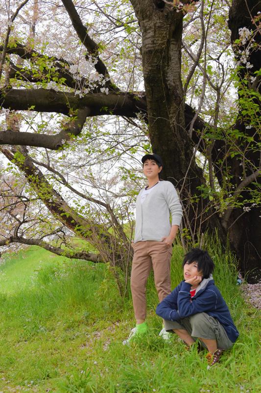 004BH6_sakura.jpg