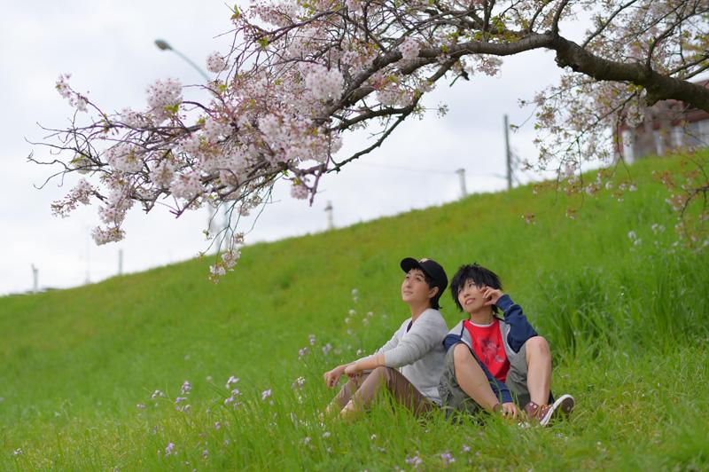007BH6_sakura.jpg