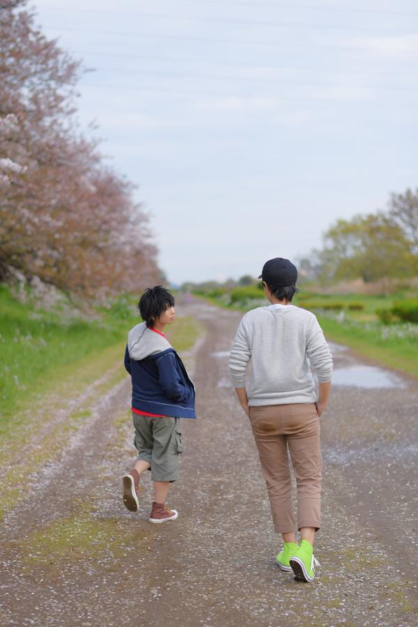 012BH6_sakura.jpg
