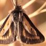 96-フチグロトゲエダシャク♂-OMD05455