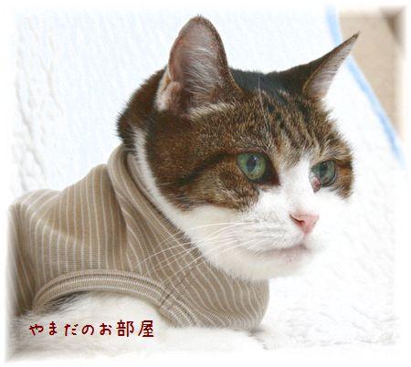 2015.7.20のスーちゃん