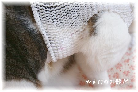 2015.7.14のスーちゃん②