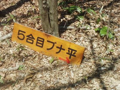 大滝根5合目