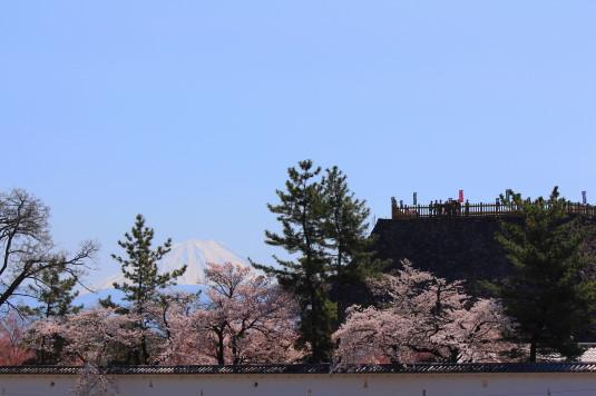 桜 舞鶴城公園 北側 外観