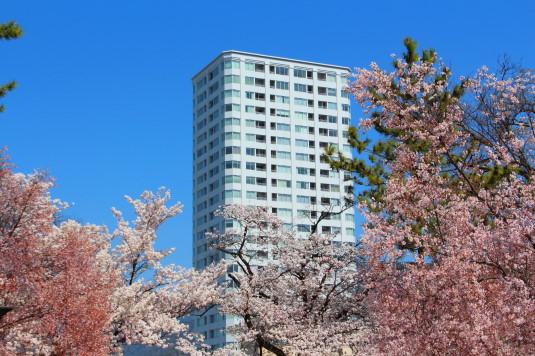 桜 舞鶴城公園 北側 セインツ25