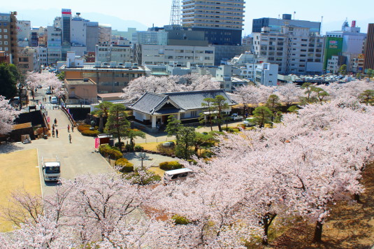桜 舞鶴城公園 上から