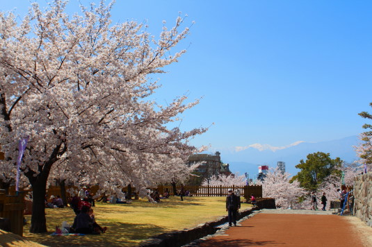桜 舞鶴城公園 鉄門前