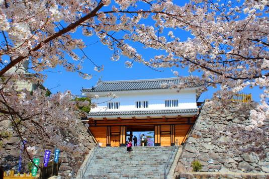 桜 舞鶴城公園 鉄門