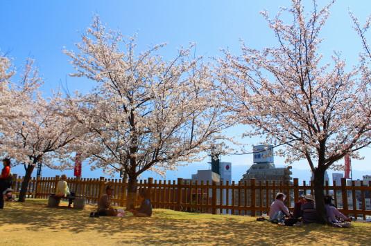 桜 舞鶴城公園 鉄門前 眺め