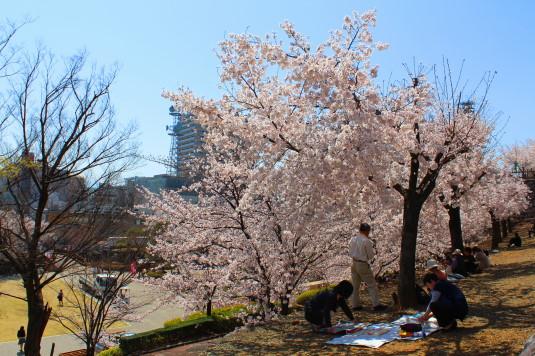 桜 舞鶴城公園 南側 石垣途中