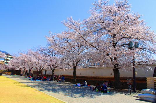 桜 舞鶴城公園 南側 壁ぞい