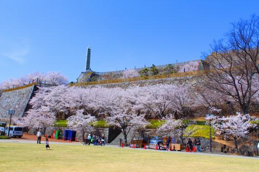 桜 舞鶴城公園 外観