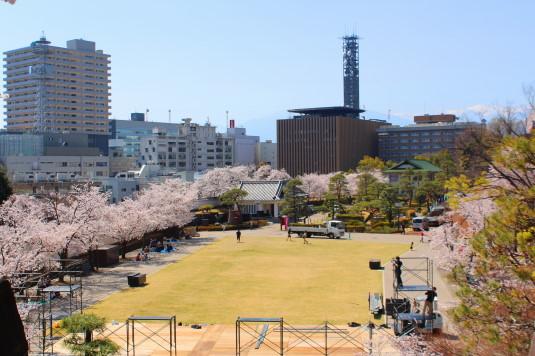 桜 舞鶴城公園 南側 広場
