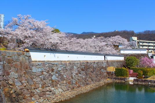 桜 舞鶴城公園 南側 堀