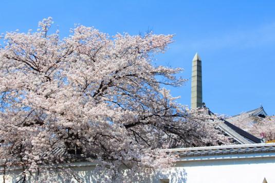 桜 舞鶴城公園 南側 謝恩塔