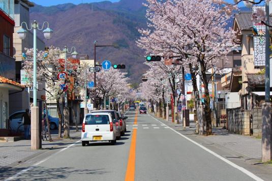桜 武田通り 南側