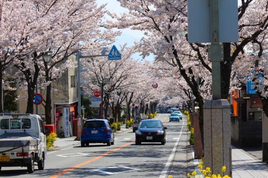 桜 武田通り 南向き