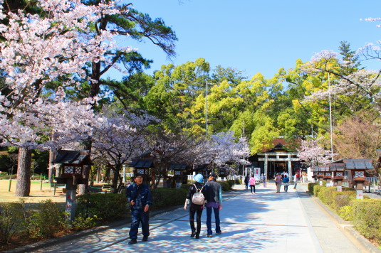 桜 武田神社 境内