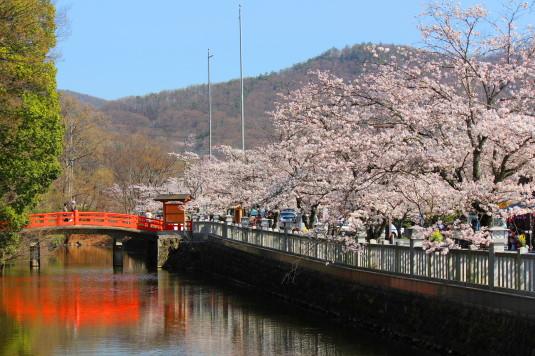 桜 武田神社 堀