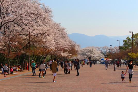 桜 小瀬 北側