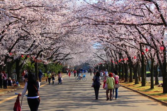 桜 小瀬 トンネル