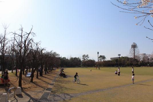 桜 小瀬 広場