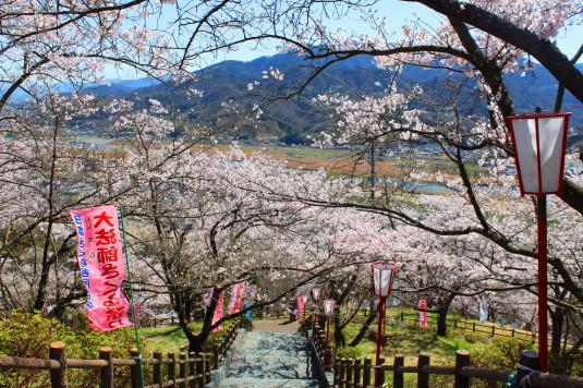 桜 大法師公園 ビュースポット 階段