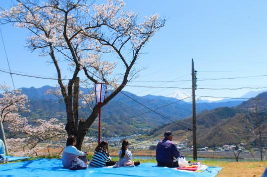 桜 大法師公園 お花見 富士山アングル