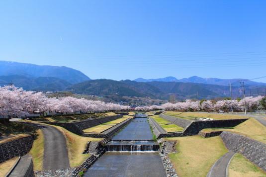 桜 滝沢川公園 全景