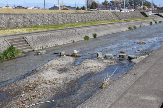 桜 滝沢川公園 飛び石