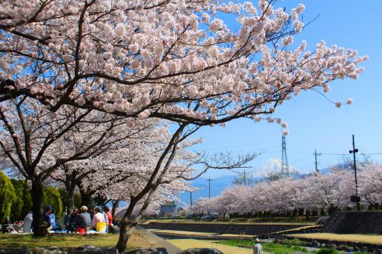 桜 滝沢川公園 外観