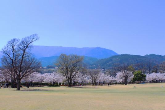 桜 滝沢川公園 総合公園