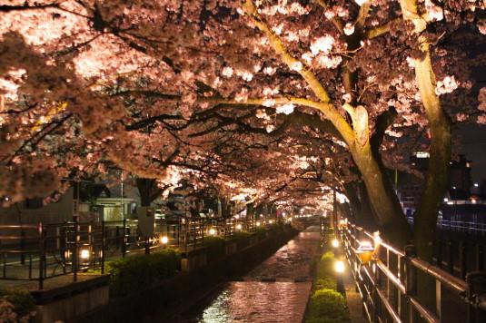 桜 石和温泉桜通り 外観