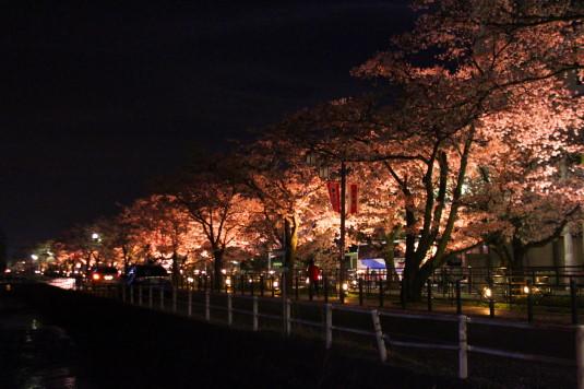 桜 石和温泉桜通り 全景