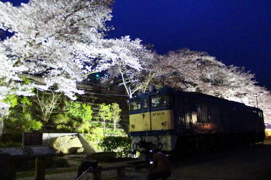 桜 甚六桜 展示列車