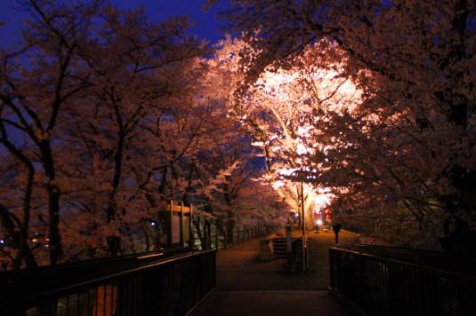 桜 甚六桜 入口
