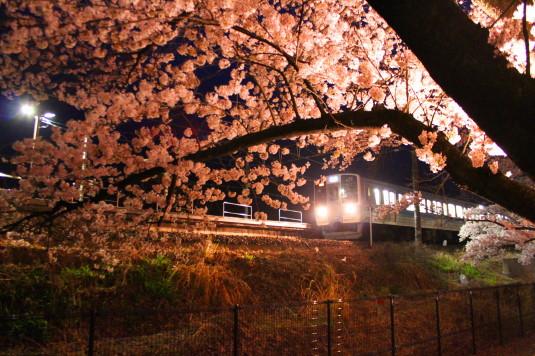 桜 甚六桜 電車