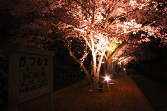 桜 甚六桜 看板