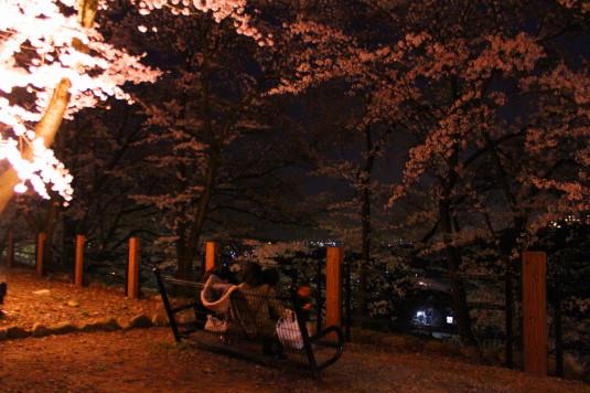 桜 甚六桜 ベンチ