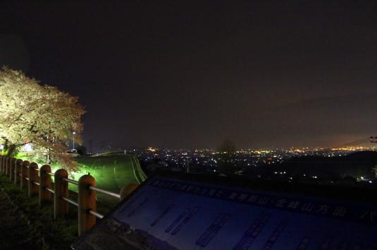 桜 甚六桜 夜景