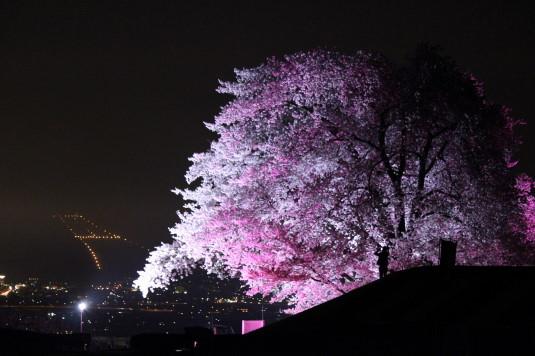 桜 八代ふるさと公園 甲州蚕影桜 夜景サブ