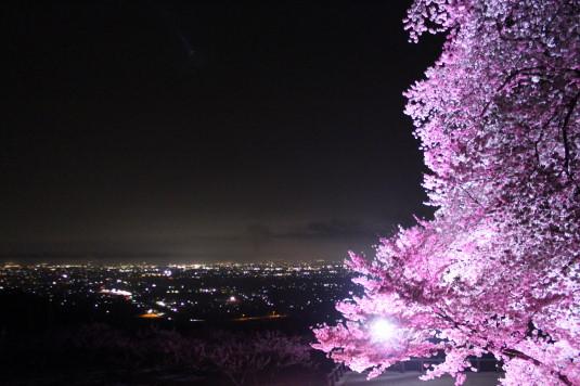 桜 八代ふるさと公園 甲州蚕影桜 夜景メイン