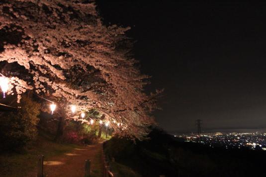 桜 八代ふるさと公園 桜並木 夜景