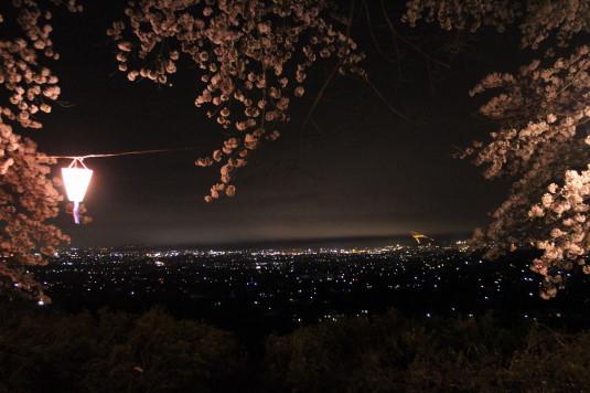 桜 八代ふるさと公園 桜並木 桜越し